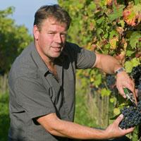 Wijngaard Arrangementen