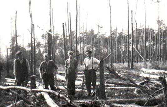 Door oorlog verwoest bos